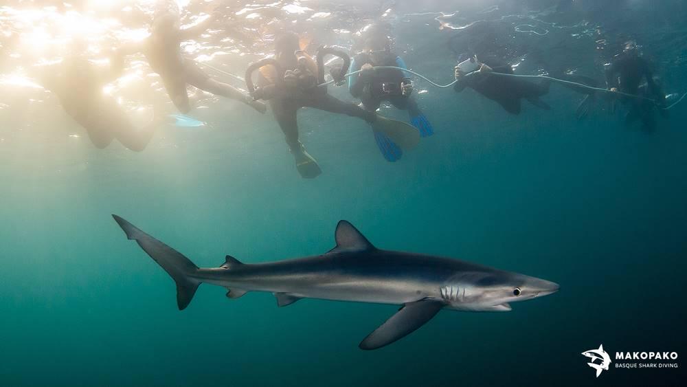 Experiencias con tiburones en el cantábrico