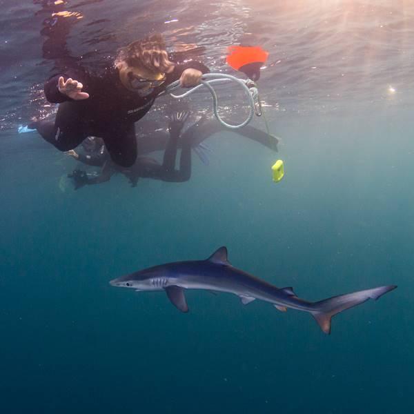 Snorkel con tiburones sin experiencia previa