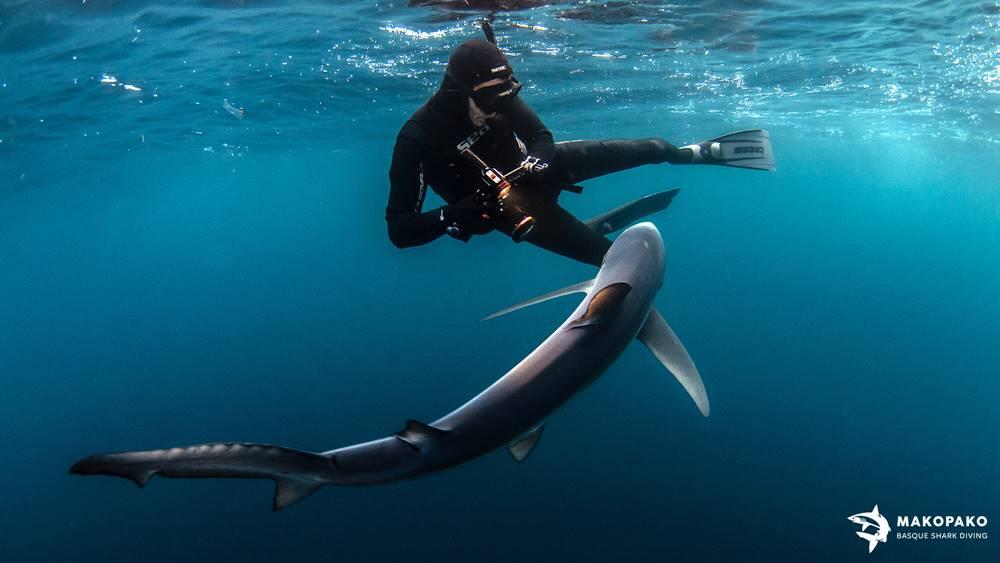 Fotografía con tiburones Mako Pako